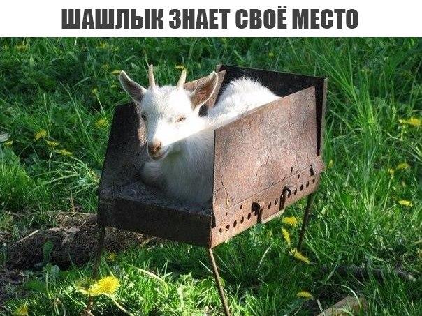 Мем про шашлык из козла